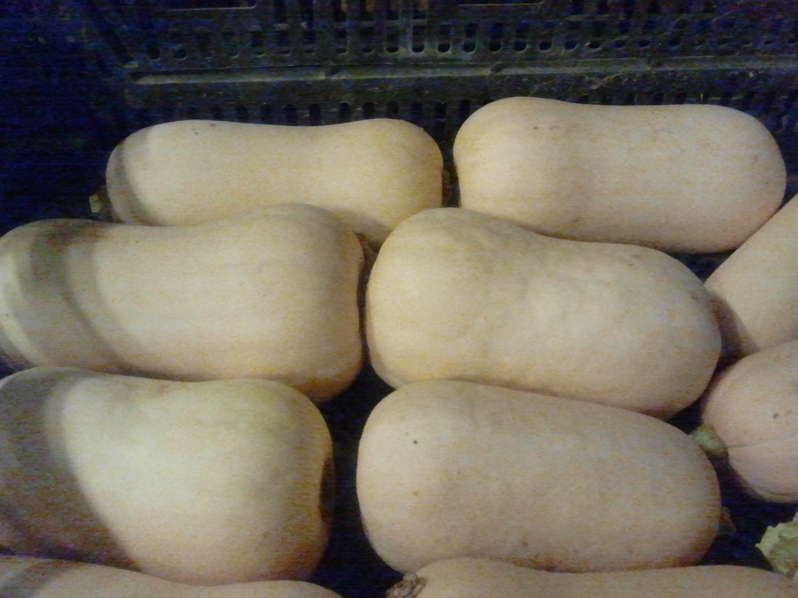 exportadores de calabaza cacahuete tipo squash