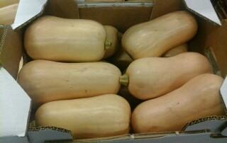 calabaza cacahuete tipo squash de España para exportar. Butternut Squash from Spain to export