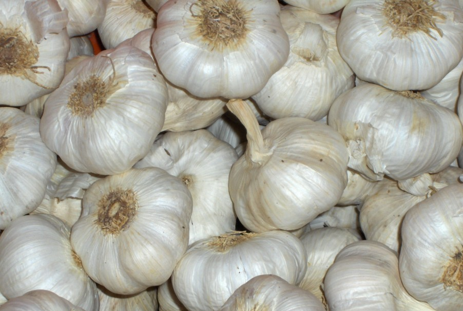 Ajo blanco de España para exportar. Garlic from Spain to export