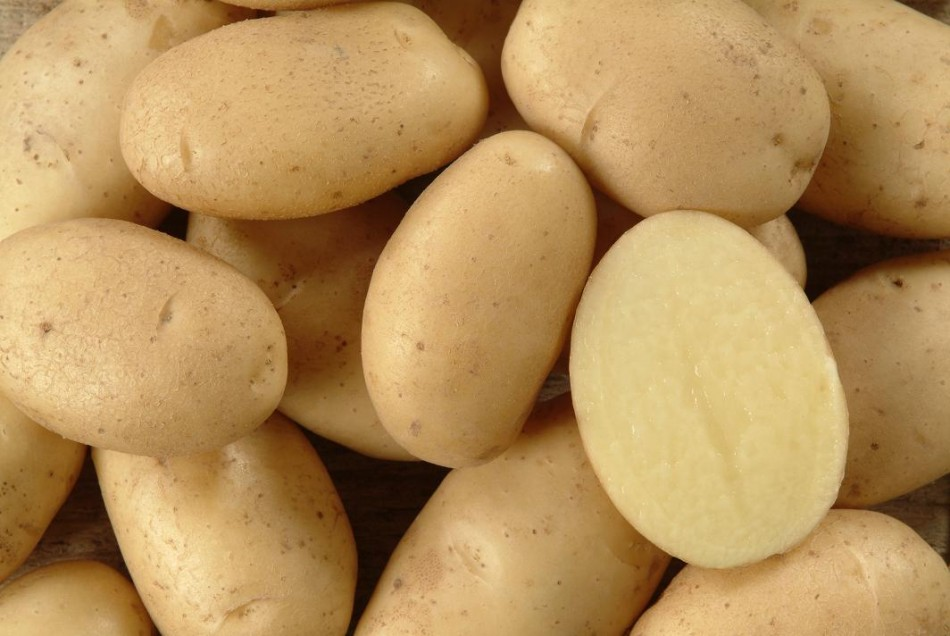 Patata de España para exportar. Potatoes from Spain to export