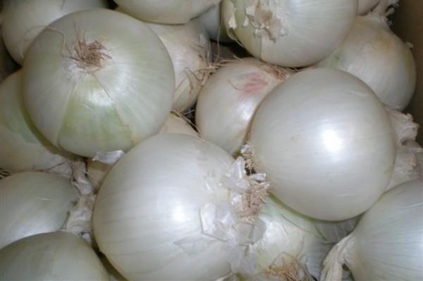 Cebolla blanca. Variedad España, Spain